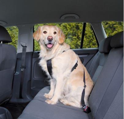 Trixie car seat belt