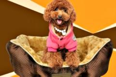 DeNik Pets - Κρεβατάκι σκύλου