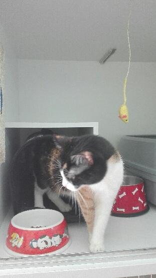 Γάτα 1 (1)