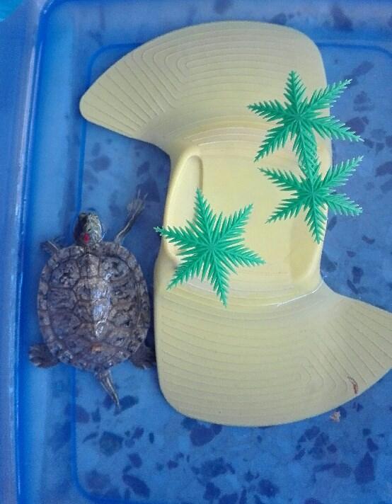 Χελώνα 1